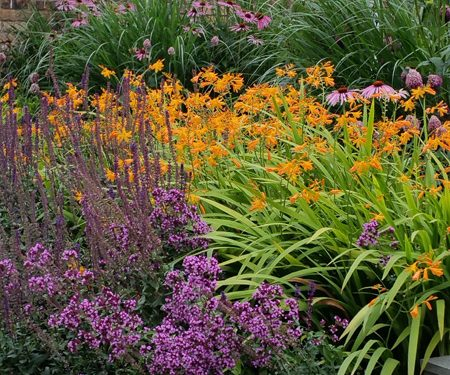 Modern perennial garden euphorbia design for Modern low maintenance plants