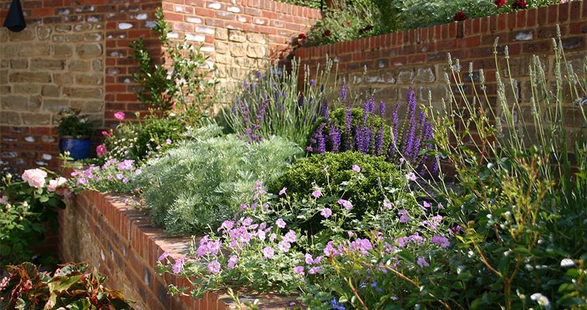 Terrace Garden Euphorbia Design